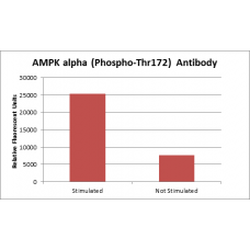 AMPKalpha (Phospho-Thr172) Fluorometric Cell-Based ELISA Kit