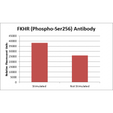 FOXO1A (Phospho-Ser256) Fluorometric Cell-Based ELISA Kit
