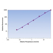 Alkaline Phosphatase Assay Kit - Fluorometric